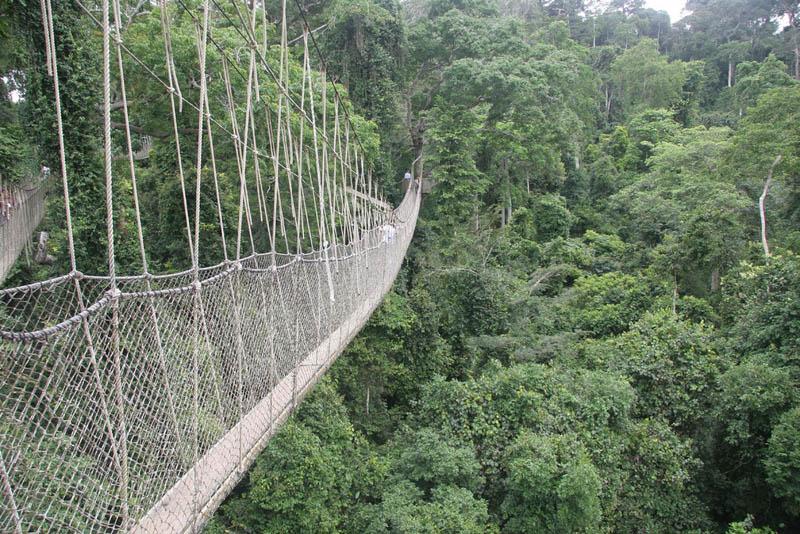 http://www.weirdlyodd.com/wp-content/uploads/2010/12/Canopy-Walk-in-Kakum-Nat%E2%80%99l-Park-Ghana-1.jpg