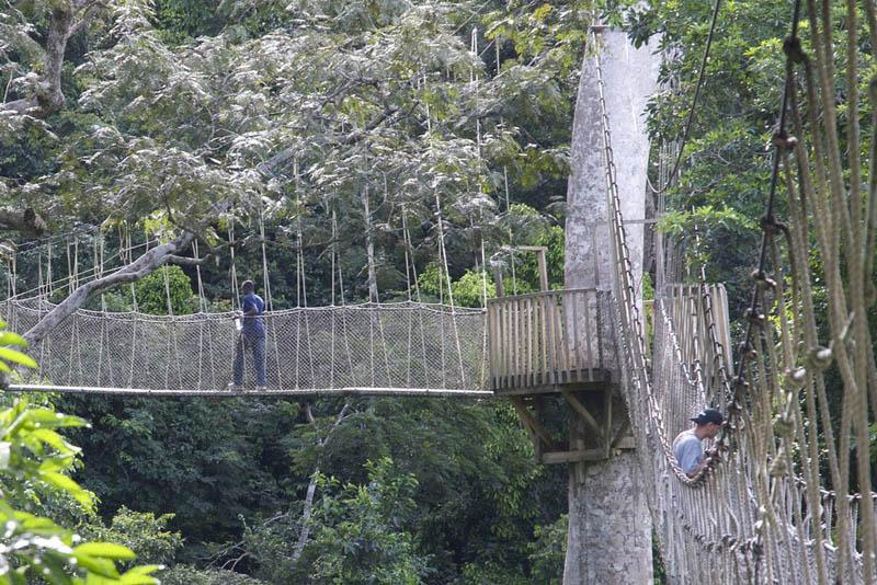 http://www.weirdlyodd.com/wp-content/uploads/2010/12/Canopy-Walk-in-Kakum-Nat%E2%80%99l-Park-Ghana-2.jpg
