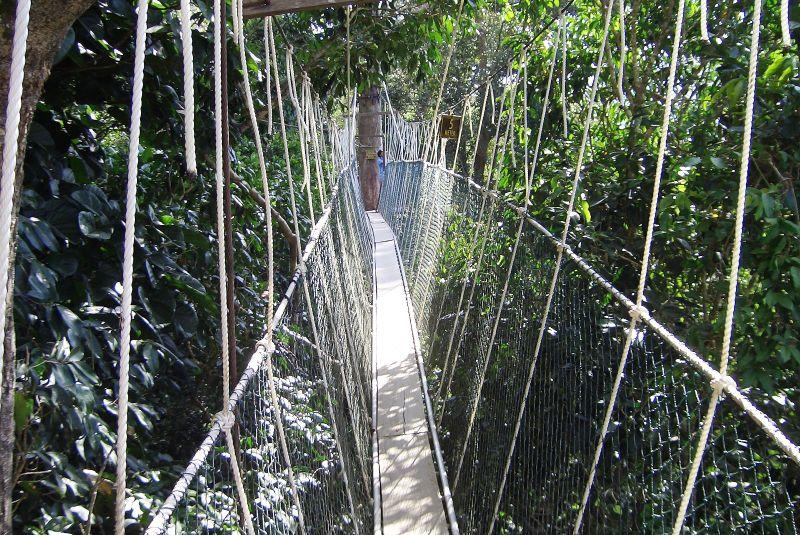 http://www.weirdlyodd.com/wp-content/uploads/2010/12/Canopy_walk.jpg