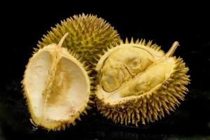 durian-gadling.png