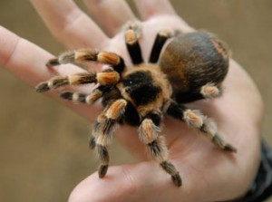 arachnologist