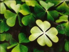 7 Ways to Make Your Own Luck