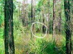 5 Possible Sightings of Bigfoot