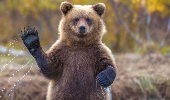 10 of the Dеаdlіеѕt Wild Animals You do Not Want To Cross
