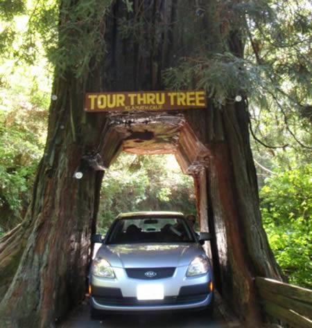 My Car Credit >> 10 Weird Drive-Thru Services Around The World WeirdlyOdd.com