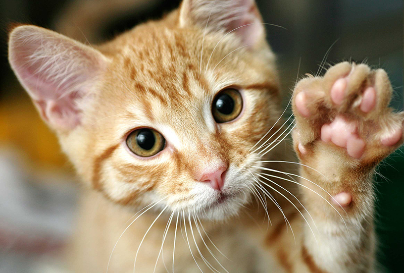 Weird Things You Didn't Know Your Cat Could Do